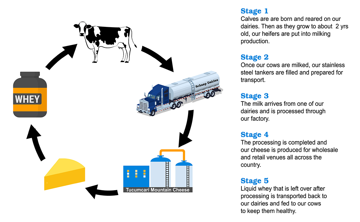 cycle of cheese production